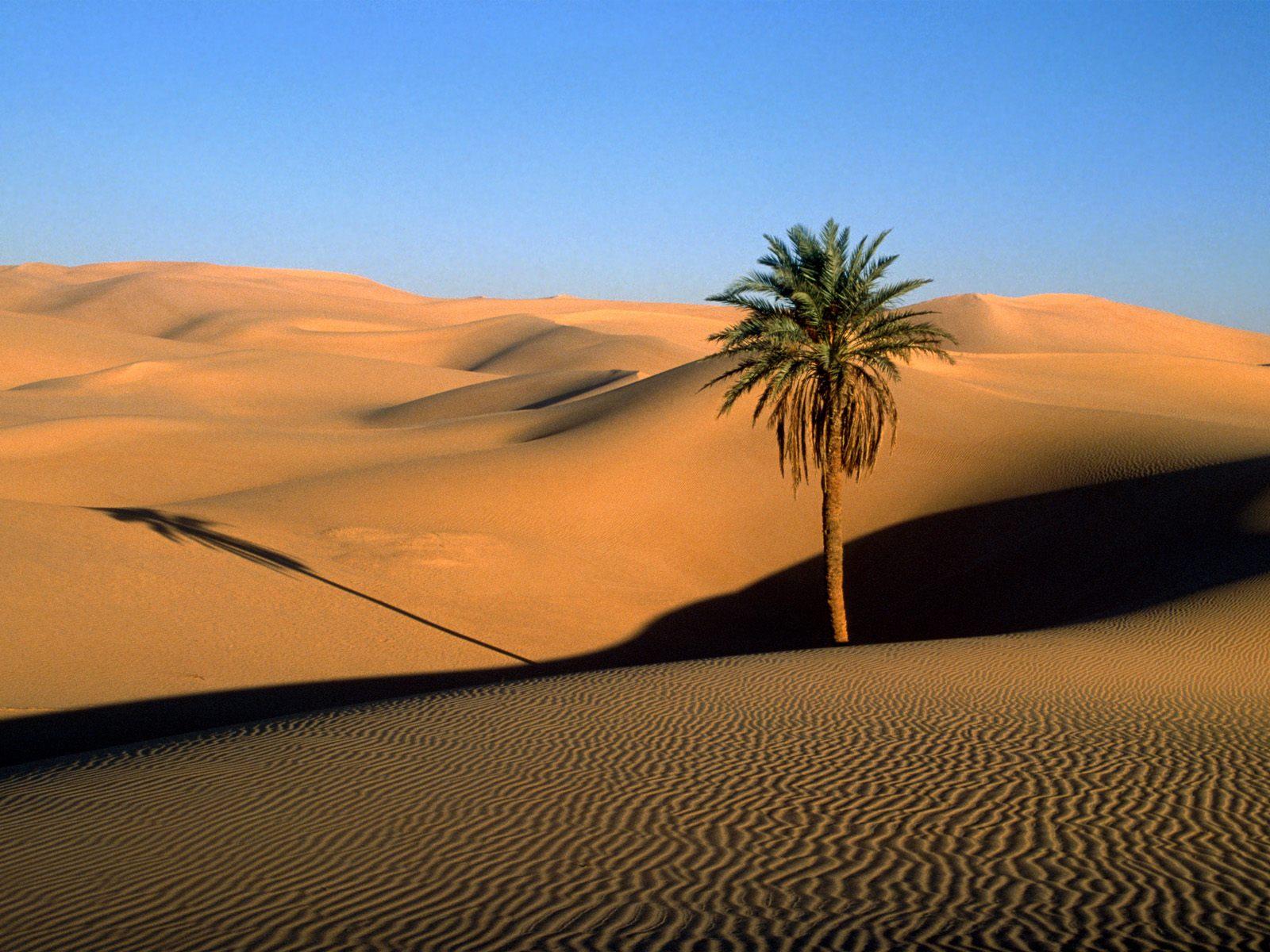le-desert