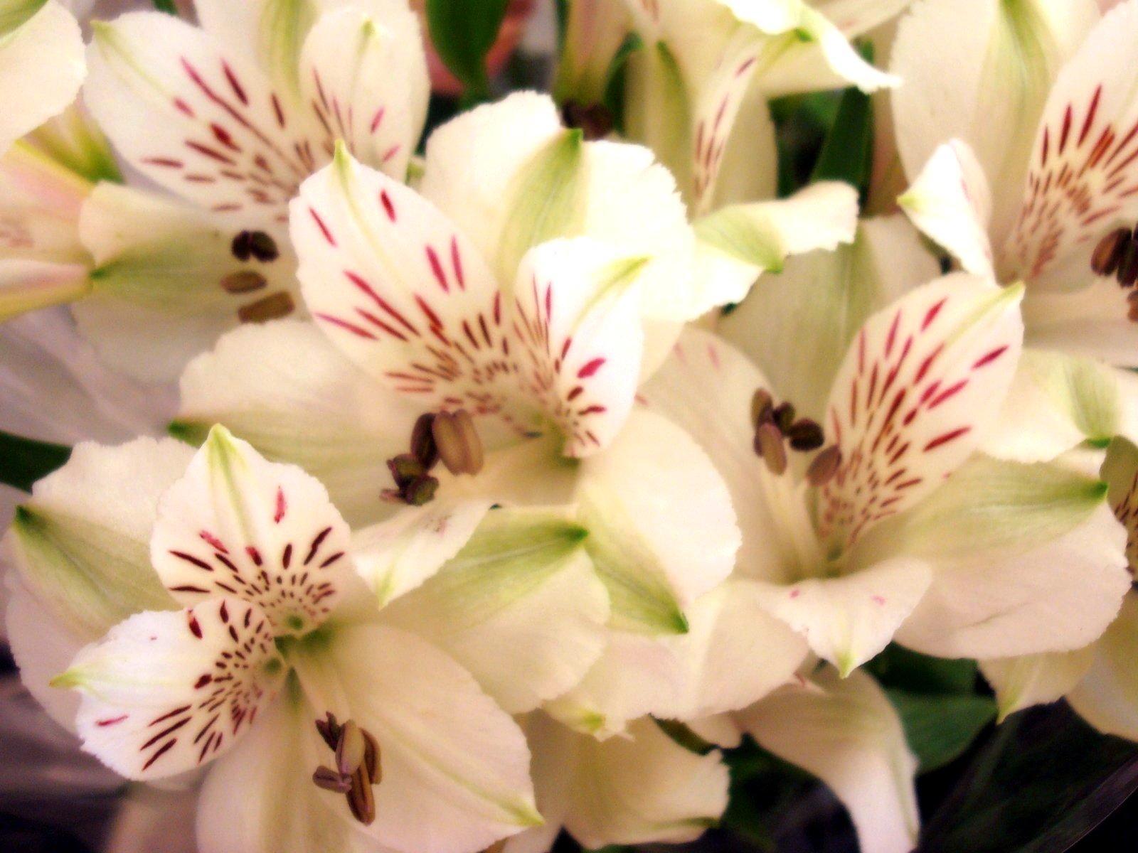 Chavou'oth, une fête fleurie